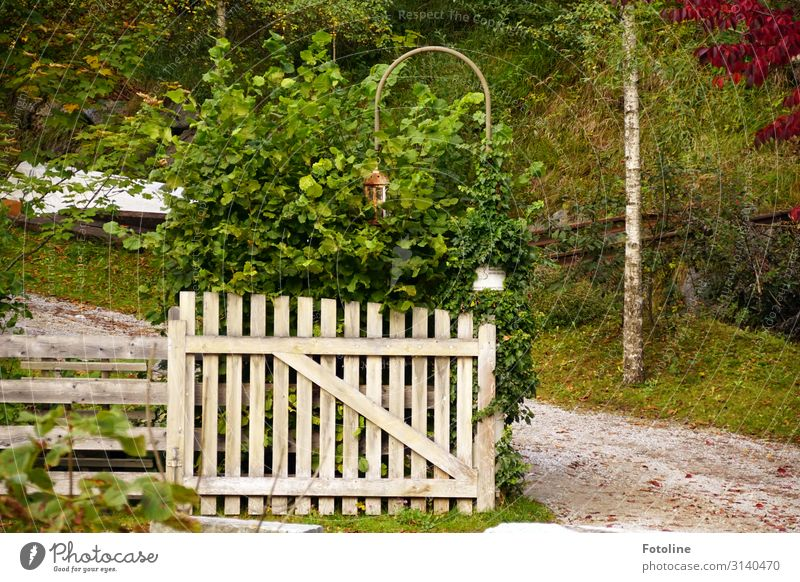 idyllic Environment Nature Landscape Plant Elements Earth Sand Autumn Grass Bushes Garden Meadow Bright Natural Green White Gate Wood Wooden fence Wooden gate