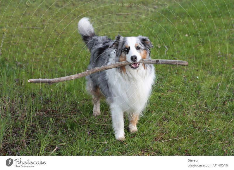 Wanna stick with me? Playing Beautiful weather Garden Park Meadow Animal Pet Dog Observe Brash Friendliness Cute Smart Joy Happiness Joie de vivre (Vitality)