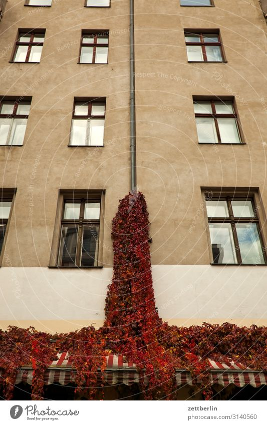 Wine on the facade House (Residential Structure) Apartment Building Town house (City: Block of flats) Facade Old building Window Glazed facade Vine Tendril