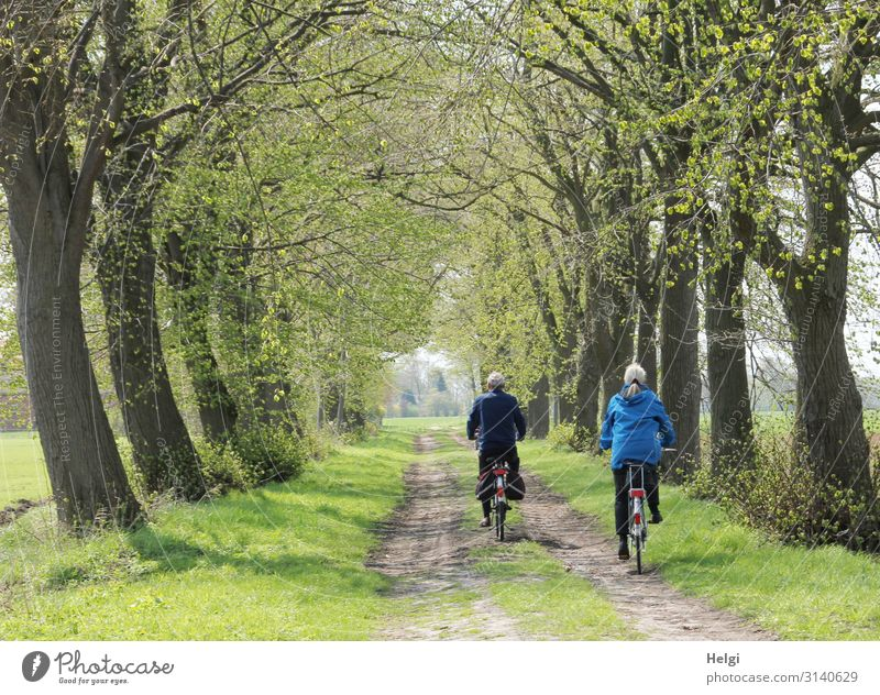 Rear view of a male and female person on a bicycle in an alley in spring Leisure and hobbies Trip Cycling tour Human being Masculine Feminine Female senior