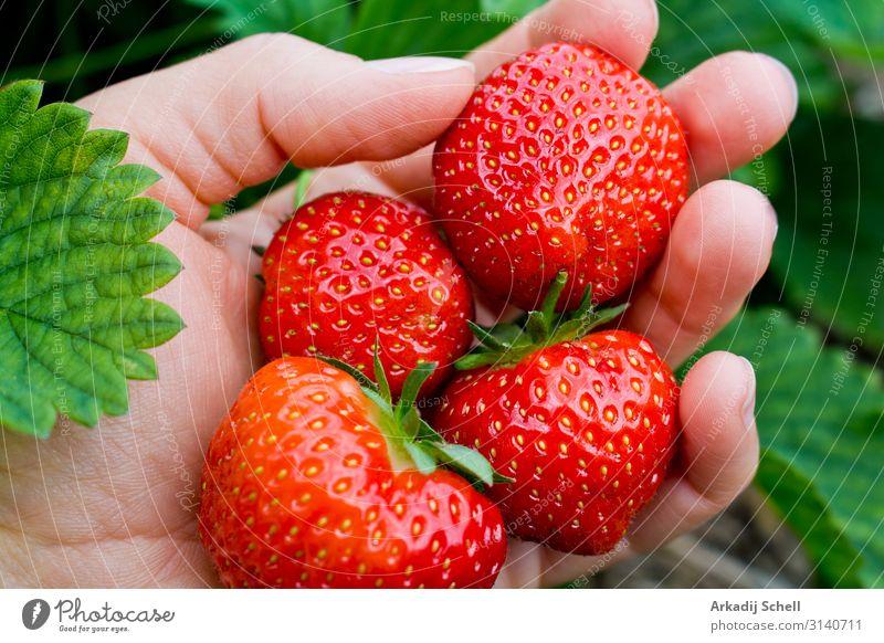 Pick juicy red strawberries Food Fruit Nutrition Breakfast Lunch Dinner Picnic Organic produce Vegetarian diet Diet Fast food Slow food Healthy Feminine Woman
