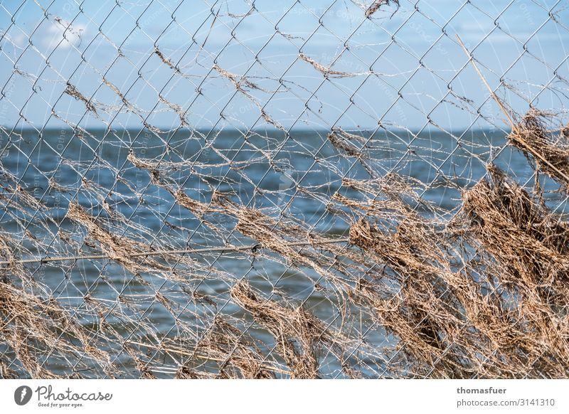 Vacation & Travel Nature Plant Landscape Ocean Far-off places Beach Environment Coast Grass Tourism Horizon Waves Arrangement Wind Protection