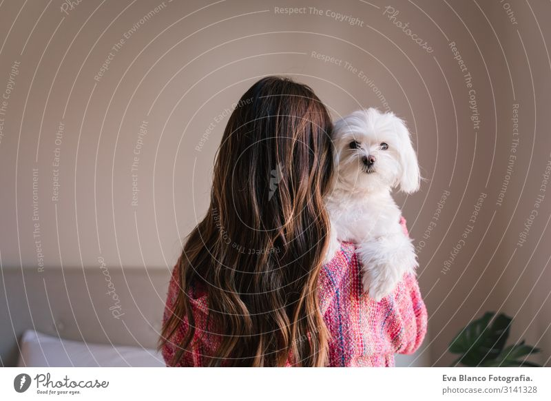young woman holding her maltese dog on shoulder at home. Pets and lifestyle. back view Youth (Young adults) Rear view Woman Dog cute small Home Interior shot