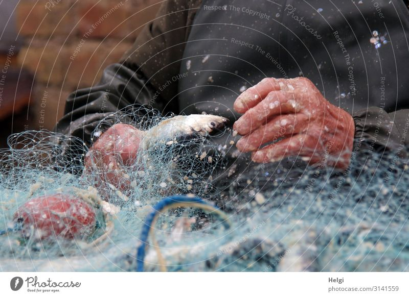 Fisherman's hands remove herring from the fishing net Food Herring Work and employment Fishery Workplace Hand 1 Human being Fishing net Plastic Net To hold on