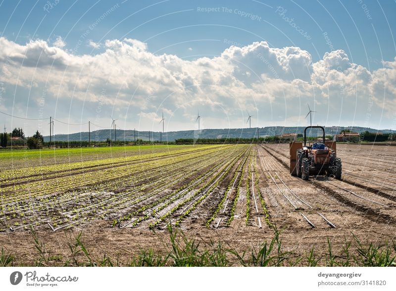 Tractor in lettuce farm. Vegetable Garden Industry Machinery Nature Landscape Plant Growth Natural Green Agriculture field Farm Rural agricultural Farmer