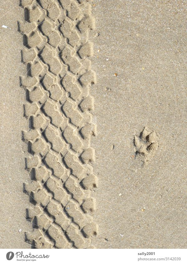Printed matter | sand marks... Sand Tracks Tyre print dog paw squeeze Sandy beach Profile Tire tread Parallel footprint Impression track search Pattern
