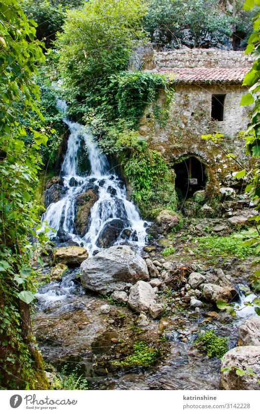 Ancient water mill in the natural reserve of Morigerati Nature Landscape Moss Forest River Oasis Ruin Environmental protection morigerati Mill water will