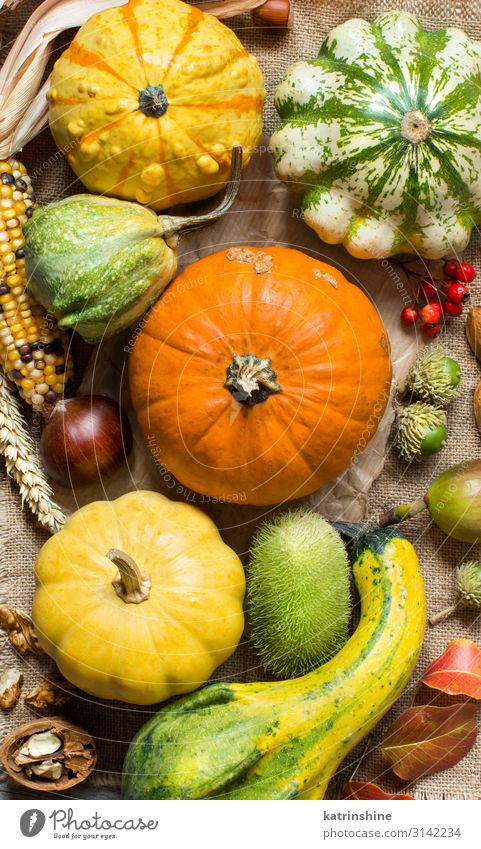 Autumn background with pumpkins Vegetable Vegetarian diet Thanksgiving Hallowe'en Group Leaf Dark Fresh Natural Yellow Green country fall Farm Agriculture