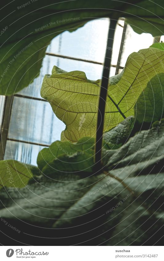 leafy Leaf Print media Botany Botanical gardens Leaf green Large Rachis handle Stalk Window Window pane Growth Exotic Plant Greenhouse care receipt Nature
