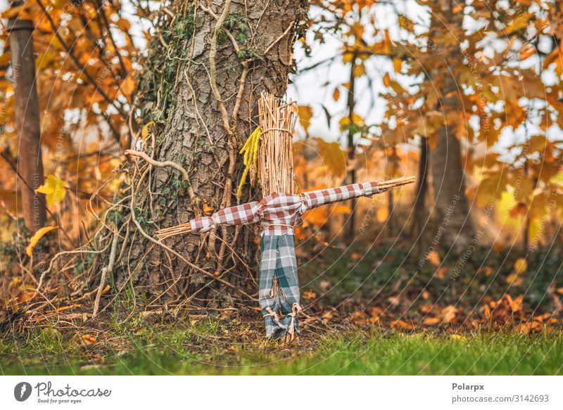 Rural scarecrow standing in a garden Joy Life Garden Hallowe'en Infancy Landscape Plant Autumn Park Toys Doll Wood Old Simple Green Red Protection Fear Horror