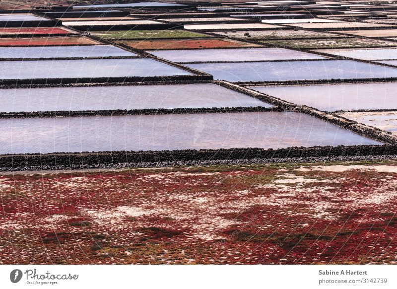salt lake Landscape Earth Water Ground cover plant Saltworks Spain Lanzarote Deserted Esthetic Authentic Friendliness Glittering Maritime Wet Blue Green Red