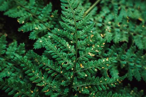 green fern texture top view Environment Nature Autumn Plant Fern Garden Park Forest Esthetic Green Seasons Background picture Green undertone Natural growth