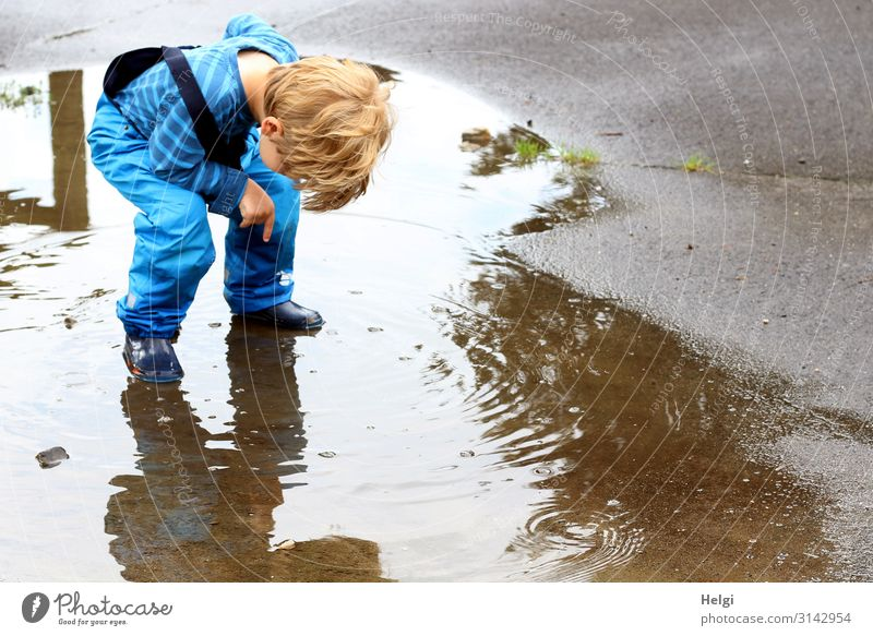 little boy stands tilted forward in a puddle and looks down Human being Child Toddler Boy (child) Infancy 1 3 - 8 years Environment Nature Summer Rain Pants