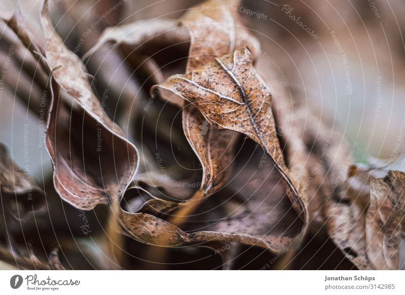 Macro of dried autumn leaves Nature Autumn Esthetic Sadness Concern Grief Lovesickness Reluctance Pain Disappointment Loneliness Exhaustion Guilty Shame Seasons