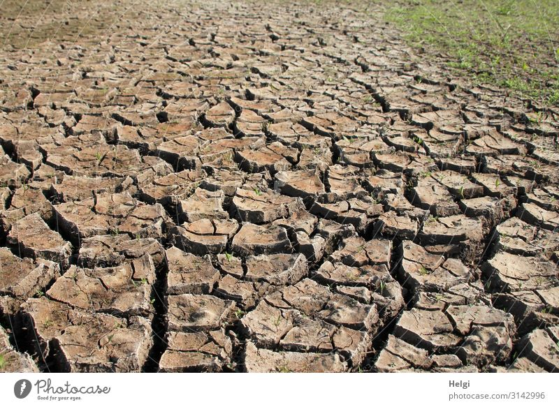 heat-dried soil with cracks and crust formation in a field Environment Nature Landscape Plant Earth Summer Climate Climate change Grass Field To dry up