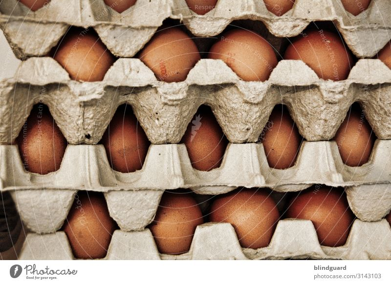 Ei, EI, Ei ... Easter preparations Food Nutrition Breakfast Lunch Agriculture Forestry Farm animal Brown Gray Egg Hen's egg Fragile Storage Stack Omelette