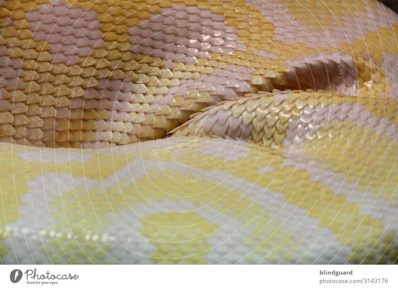Snakes in Paradise Animal Wild animal Scales Zoo 1 Sleep Yellow Gray Pink White Reptiles Colour photo Interior shot Detail Deserted Artificial light Blur