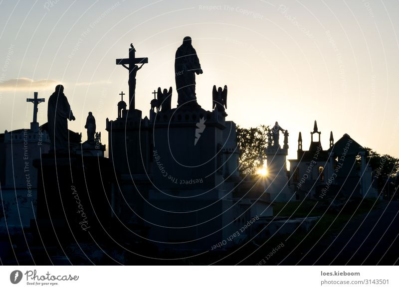 Sunset at Cementerio General with backlight Vacation & Travel Tourism Sightseeing City trip Summer Hallowe'en Town Church Creepy Sadness Death Tradition