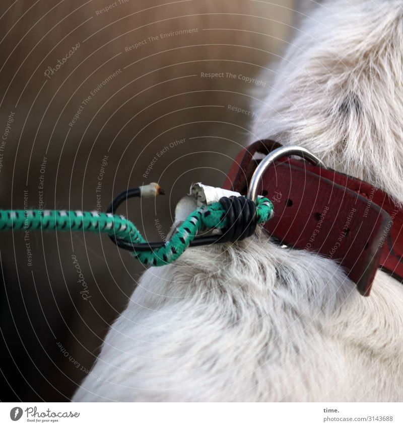 suspense Animal Pet Dog Pelt 1 Dog collar Dog lead Checkmark Ring Sit Wait Simple Safety Protection Relationship Discover Accuracy Idea Testing & Control