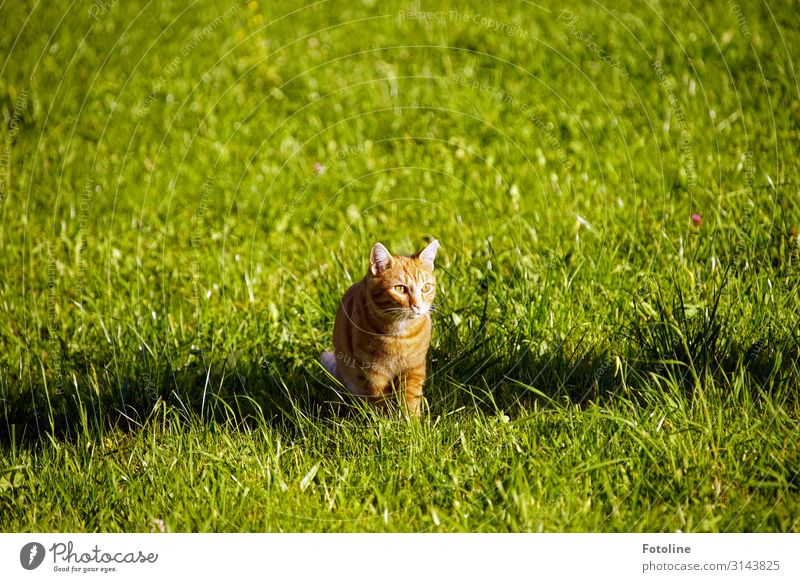 Shady place ;-) Environment Nature Landscape Plant Animal Beautiful weather Grass Garden Park Meadow Pet Cat Animal face Pelt 1 Free Bright Natural Brown Green