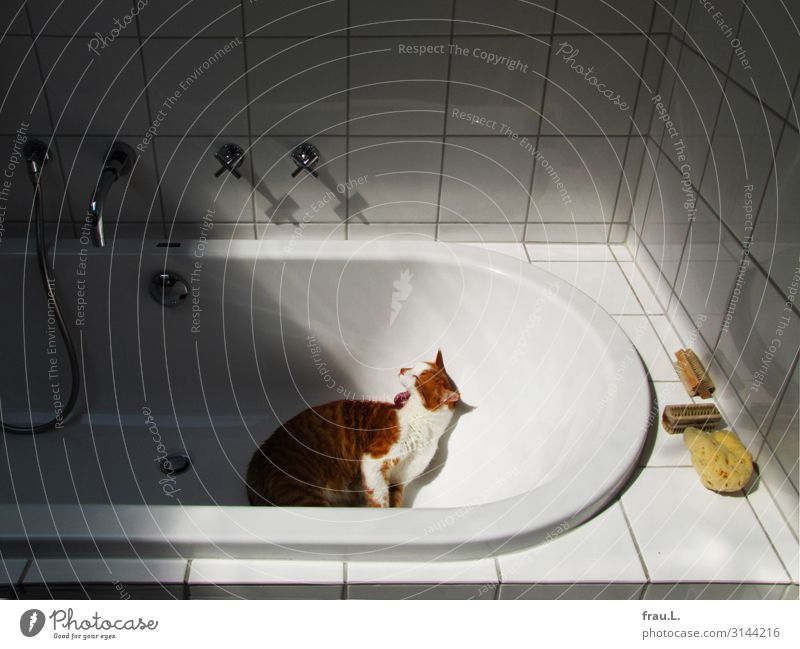 bathing day Bathroom Animal Pet Cat 1 Esthetic Beautiful Uniqueness Small Safety (feeling of) Calm Contentment polish Coat care Bathtub Domestic cat Cleanliness