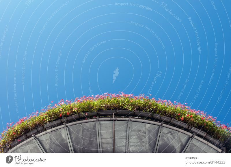 Geraniums on round balcony from below flowers Balcony plant Perspective Worm's-eye view Round Above Sky Blue Beautiful weather Summer warm Leisure and hobbies