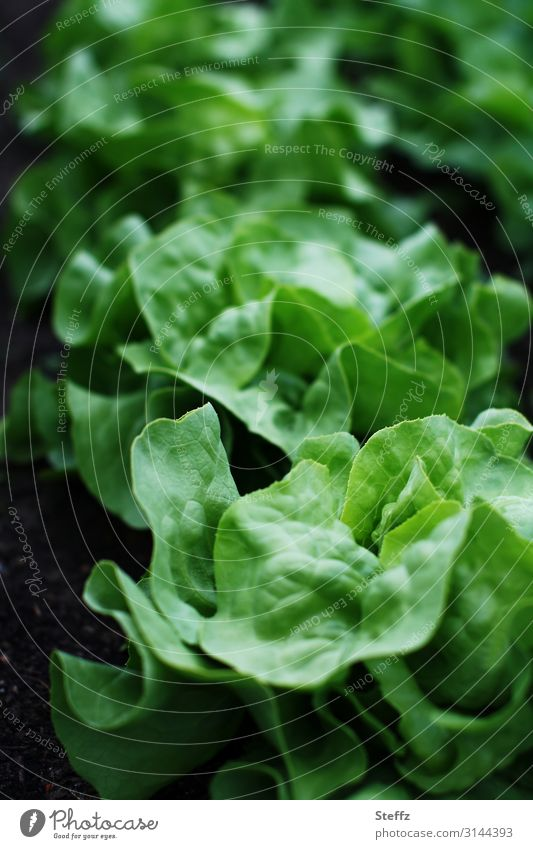 Nature Healthy Eating Summer Plant Beautiful Green Food Environment Natural Garden Nutrition Fresh Growth Delicious Vegetable