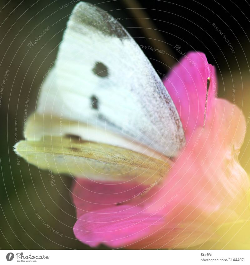 looking for a deeper level Environment Nature Summer Flower Blossom Wild plant Garden Forest Germany Butterfly Wing Pieridae Cabbage white butterfly Blossoming