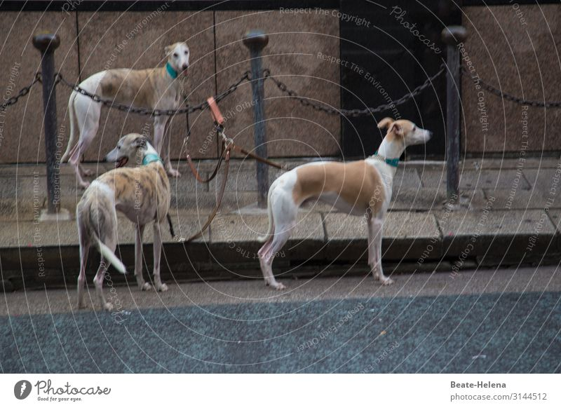 On Tokyo's streets Jogging Downtown Wall (barrier) Wall (building) Pedestrian Street Animal Dog Greyhound 3 Group of animals Movement Fitness Going Walking