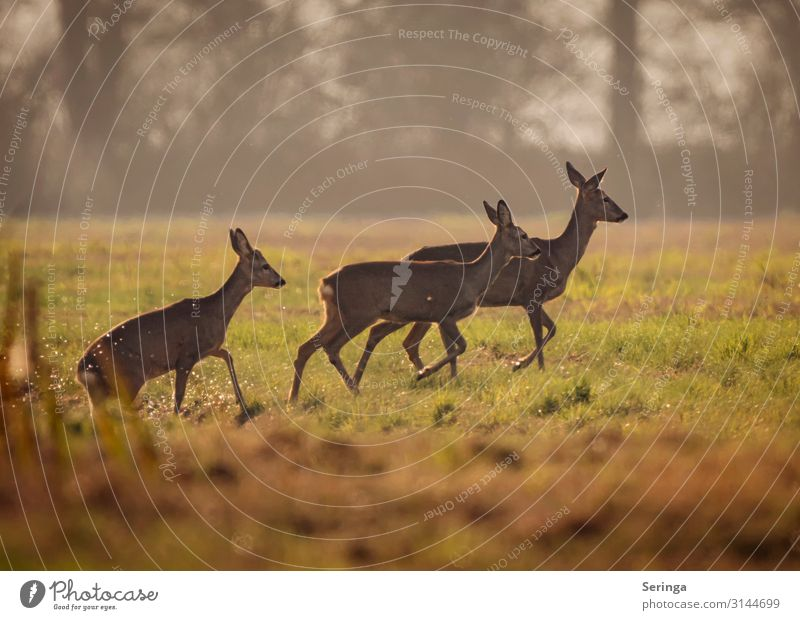 Deer coming out of the ditch Environment Nature Landscape Plant Animal Autumn Park Meadow Field Forest Wild animal Animal face Pelt Paw Animal tracks 3