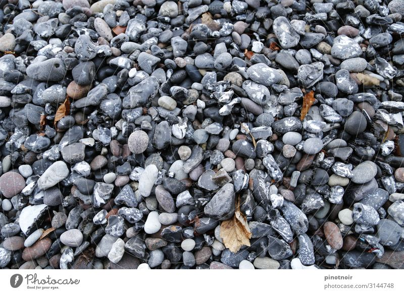 beach pebbles Beach Environment Nature Autumn Coast Baltic Sea Ocean Stone Maritime Horizontal Tide Gray scale value Background picture Structures and shapes