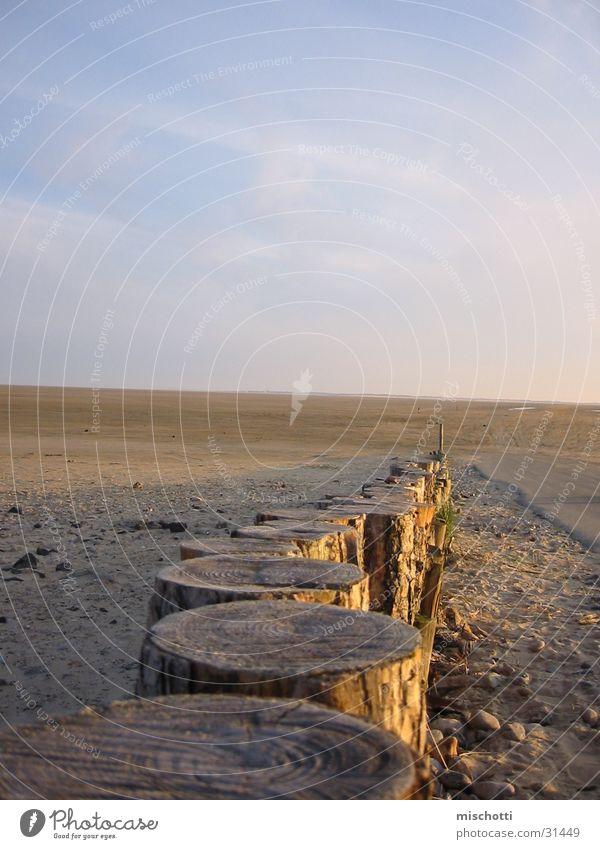 Sky Tree Sun Beach Wood Denmark