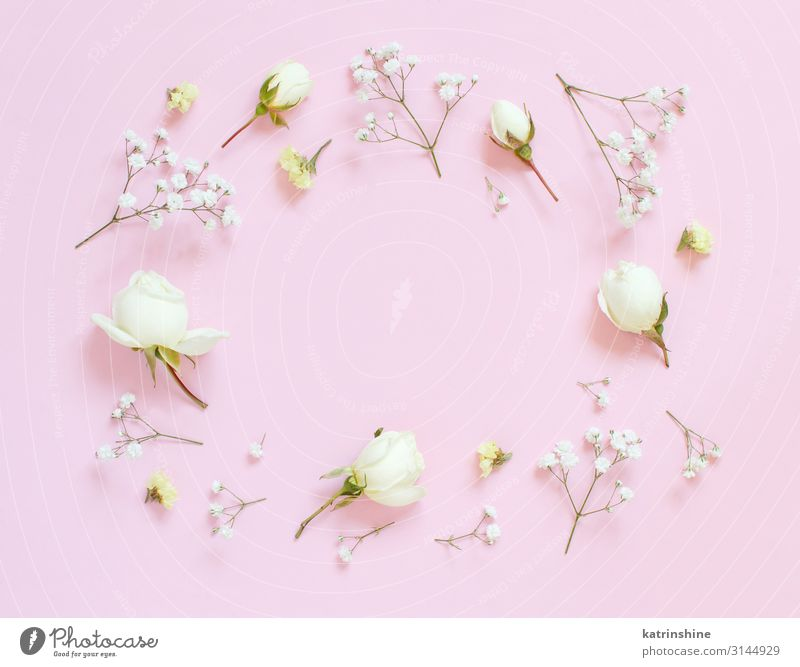 Flowers on a light pink background Design Decoration Wedding Woman Adults Mother Rose Above Pink Elegant Creativity romantic flat lay gypsophila
