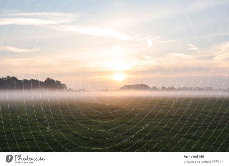 Fog Landscape.Early Morning Mist in the meadow with trees Beautiful Summer Sun Wallpaper Nature Sky Autumn Warmth Tree Grass Meadow Forest Natural Yellow Pink