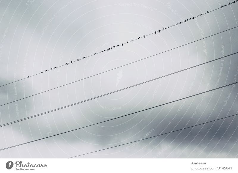 In front of a grey sky covered with clouds, ravens sit on one of five power lines Energy industry Environment Nature Animal Air Sky Clouds Storm clouds Autumn