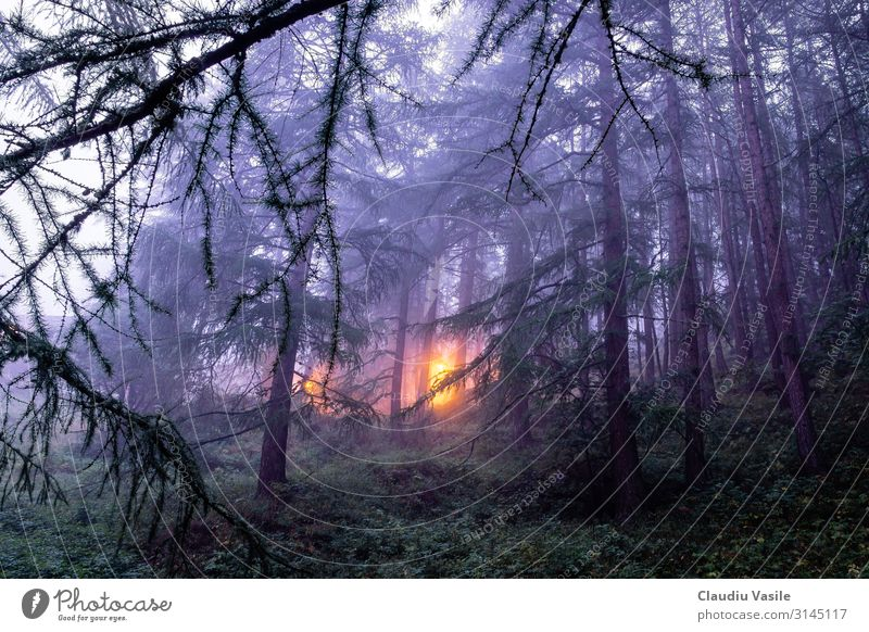 Foggy Forest with a light in the distance, Zermatt, Switzerland Vacation & Travel Tourism Trip Mountain Hiking Nature Landscape Plant Tree Alps Moody Fear