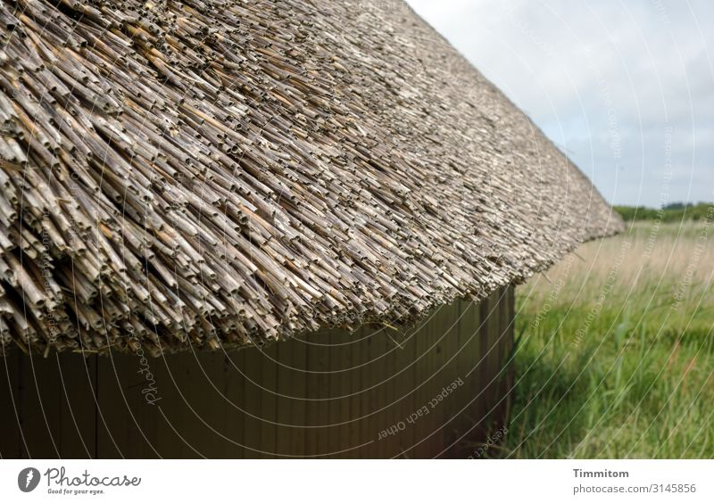 thatched roof Vacation & Travel Environment Nature Landscape Plant Weather Beautiful weather Grass Meadow Denmark Hut Wall (barrier) Wall (building) Roof Wood