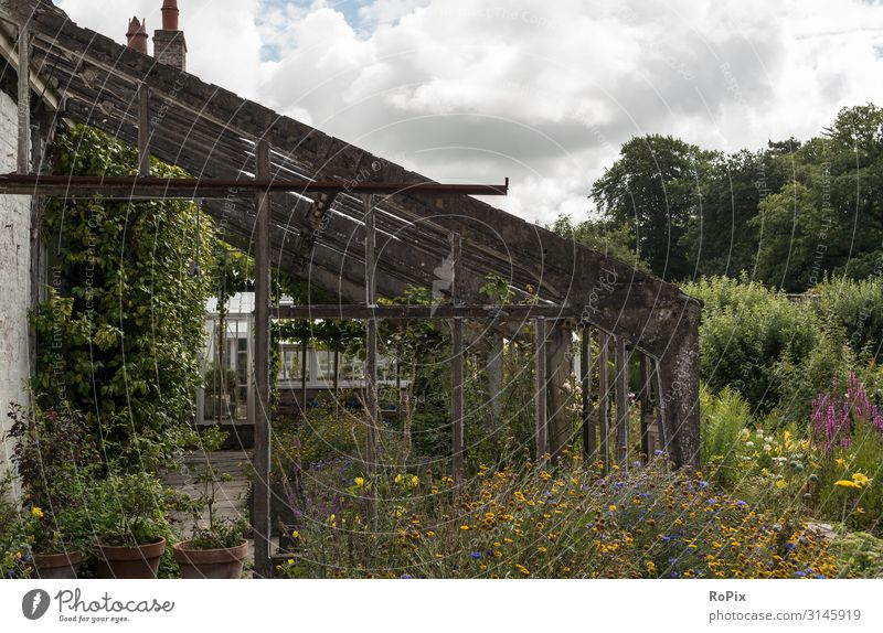Desserted greenhouse in a wild garden. Lifestyle Style Design Wellness Relaxation Leisure and hobbies Living or residing Garden Education Work and employment