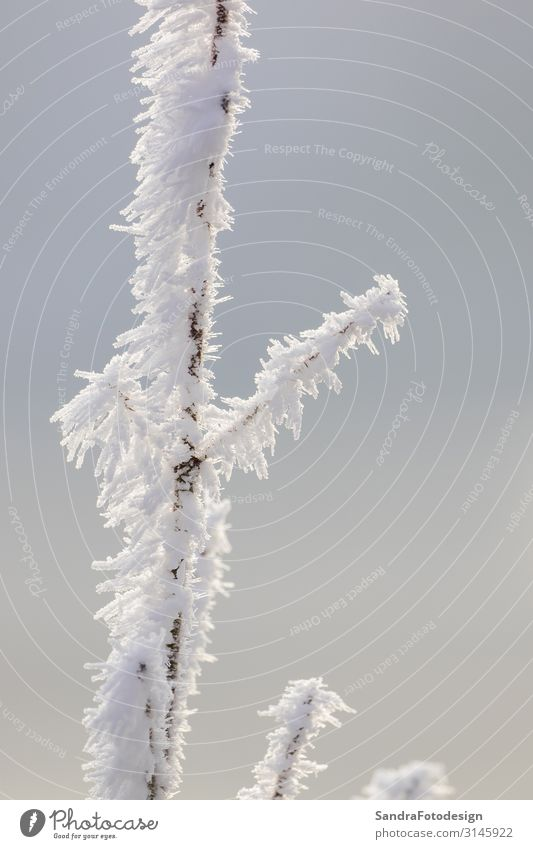 A frosty branch covered with snow Leisure and hobbies Trip Winter Snow Winter vacation Hiking Garden Nature Sky Weather Park Forest Cool (slang) Cold White