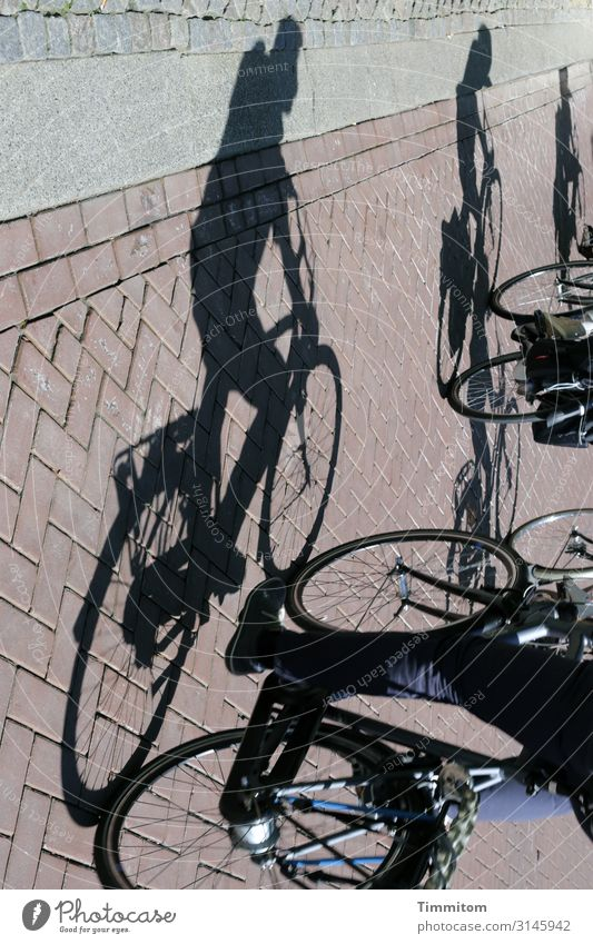 Dynamic | with shadow and dynamo Bicycle Cycling Shadow Street Paving stone Cycle path bicycle dynamo 3 Transport Traffic infrastructure Driving Mobility