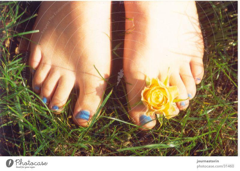 footflower Flower Yellow Meadow Grass Nail polish Romance Barefoot Sun Summer Feet Blue Skin Nature Exterior shot