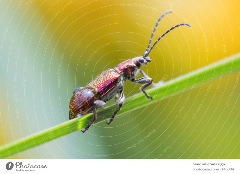A beetle crawls up on the grass outside Summer Garden Nature Animal Park Farm animal Beetle 1 Hang Sit Jump Small green insect wildlife leaf Wild pestilence