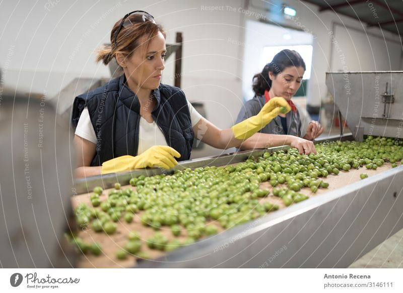 working women in olives packing Fruit Work and employment Profession Factory Industry Business Woman Adults Hand Gloves Select Testing & Control Quality barrel