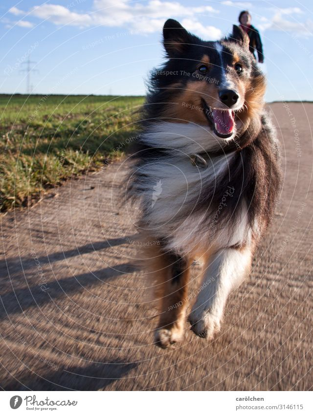 Dog Animal Joy Jump Joie de vivre (Vitality) Pet Running Puppydog eyes Walk the dog