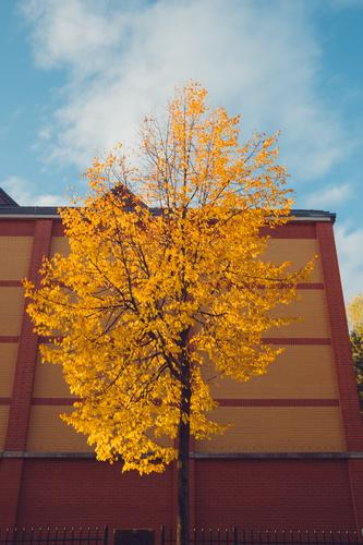 Nature Town Tree House (Residential Structure) Leaf Calm Forest Autumn Yellow Orange Facade Transience To go for a walk Seasons Treetop Blue sky