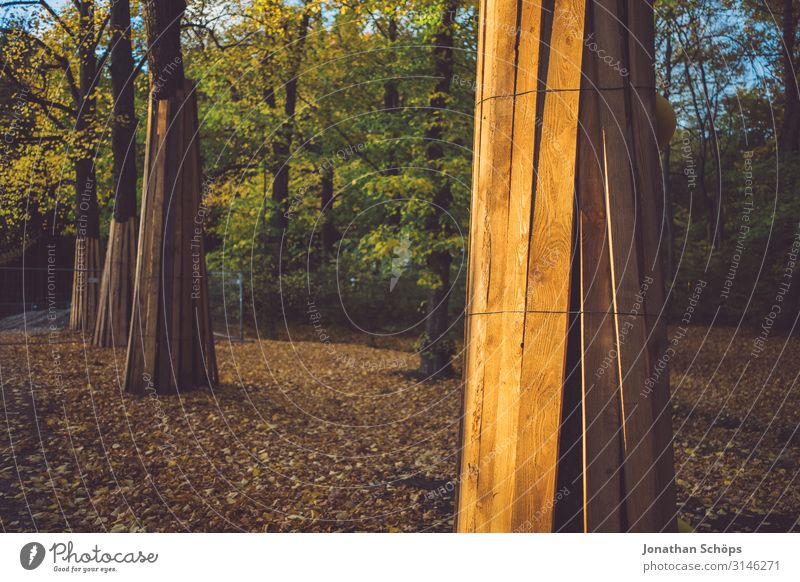 Trees in autumn forest protected from a construction site Evening sun attentiveness Exterior shot reflection Chemnitz Season foliage October outdoor