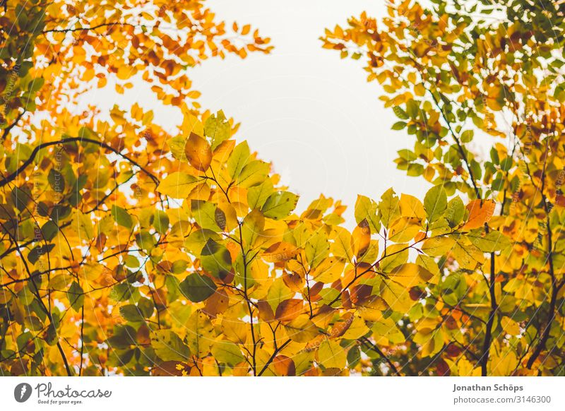 colorful autumn leaves with gap for the sky Calm Nature Autumn Leaf Forest Yellow Attentive Transience Evening sun Seasons October Autumnal Multicoloured Orange
