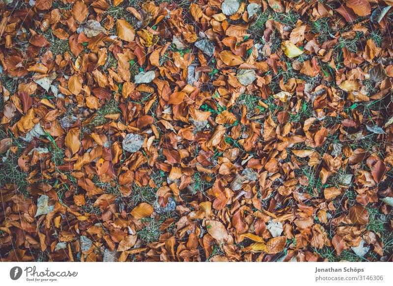 Autumn leaves on meadow top view Calm Nature Leaf Forest Yellow Attentive Transience Evening sun Chemnitz Seasons October Autumnal Multicoloured Brown