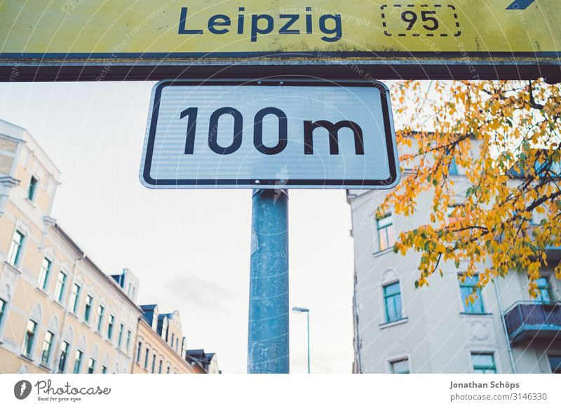 100m to Leipzig Calm Nature Autumn Leaf Forest Yellow Attentive Transience Evening sun Chemnitz Seasons October To go for a walk Day colored golden hour