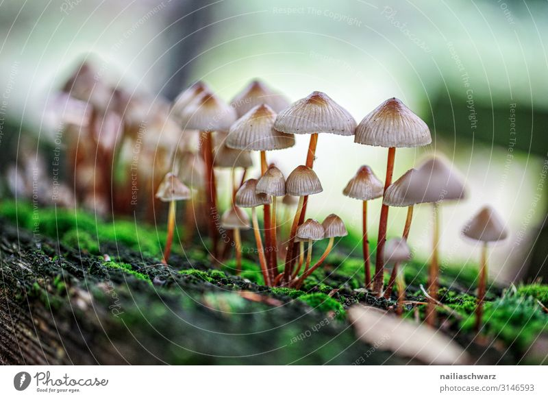 Mushrooms, Palatinate Forest Environment Nature Plant Autumn Moss Wild plant Galerina Park Growth Thin Natural Cute Green White Peaceful Colour Colour photo